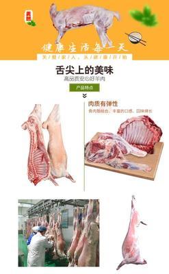 安徽省宿州市萧县羊肉类 生肉