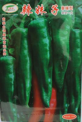 河北省邯郸市鸡泽县尖椒种子 90%以上 杂交种