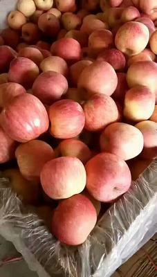 山东省临沂市沂水县红富士苹果 光果 条红 75mm以下