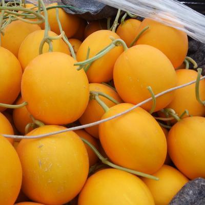 这是一张关于瑞红香瓜 2斤以上的产品图片