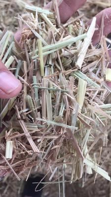 天津宝坻区稻草
