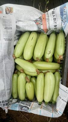 云南省曲靖市麒麟区绿皮西葫芦 0.4斤以上
