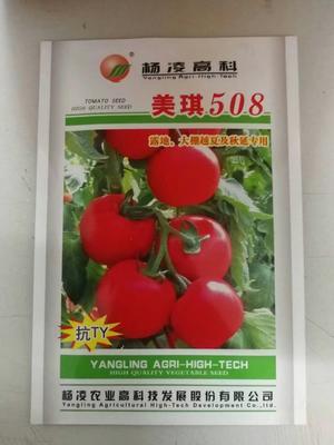 河南省郑州市惠济区硬粉番茄种子 98% 原种(亲本)