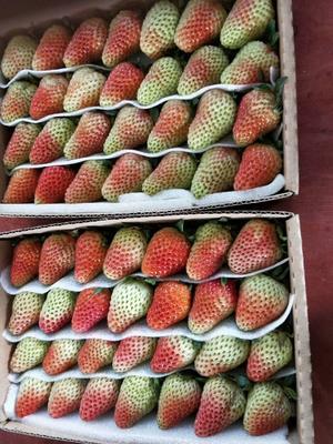 云南省曲靖市会泽县蒙特瑞草莓 20克以上