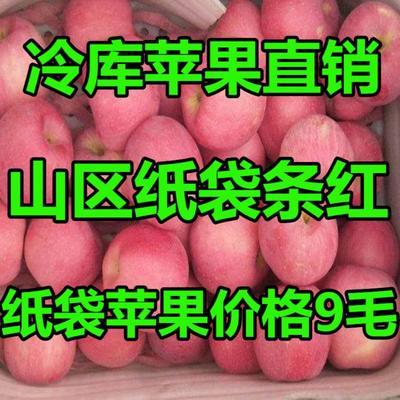 山东省临沂市沂水县水晶富士 纸袋 条红 75mm以上
