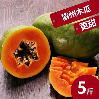 广东省湛江市雷州市红心木瓜 1.5 - 2斤