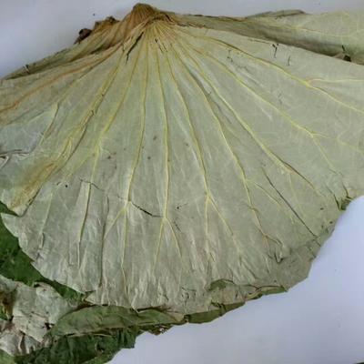 这是一张关于干荷叶 的产品图片