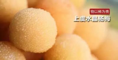 浙江省台州市仙居县白沙杨梅 2.5 - 3cm