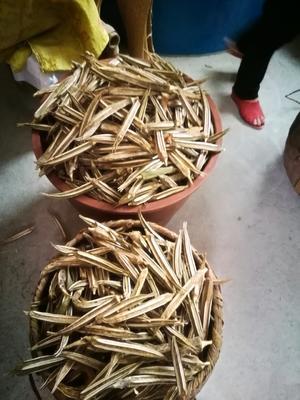 江西省宜春市袁州区黄秋葵初榨油