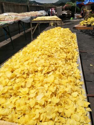 贵州省六盘水市盘县土豆片 24个月以上