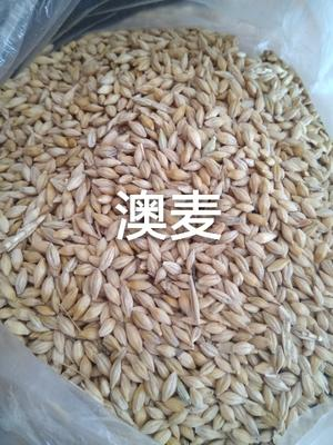 天津滨海新区皮大麦