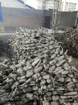 云南省红河哈尼族彝族自治州弥勒市巨无霸莲藕 13-15cm 30~35cm