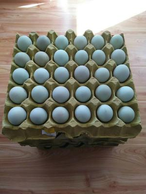 甘肃省定西市通渭县绿壳鸡蛋 食用 礼盒装
