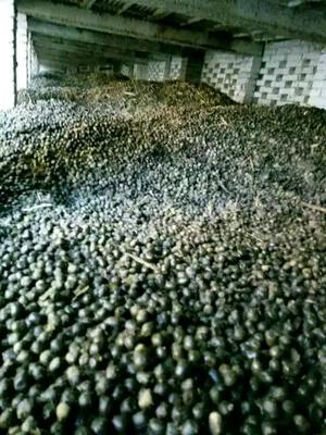 这是一张关于禽畜粪的产品图片