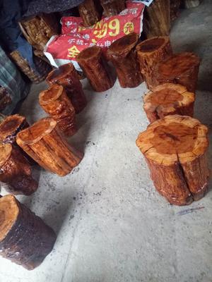 河北省沧州市献县枣木