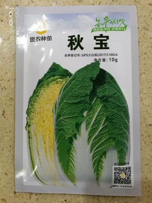 山东省临沂市兰山区白菜种子 杂交种