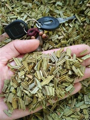 这是一张关于铁树叶的产品图片