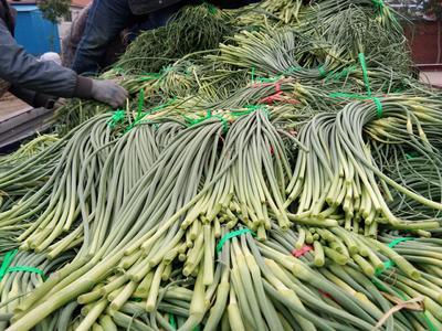 山东省青岛市平度市平度蒜苔 一茬 50~60cm 通货