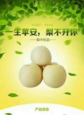 广东省清远市连州市水晶梨 200-250g 80mm以上