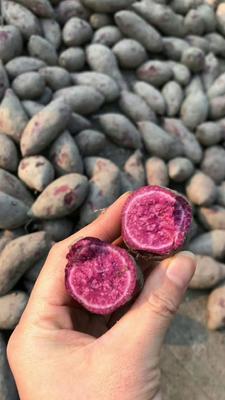 广西壮族自治区桂林市灵川县大量公应紫薯 2两以下