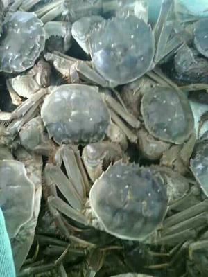 浙江省丽水市云和县洪泽湖螃蟹 2.0-2.5两 母蟹