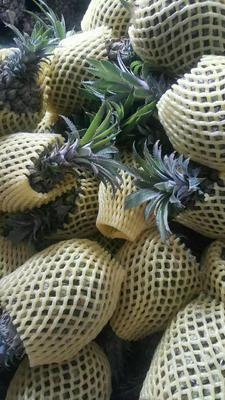 云南省昆明市官渡区香水菠萝 1.5 - 2斤
