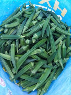 这是一张关于黄秋葵 8 - 10cm的产品图片