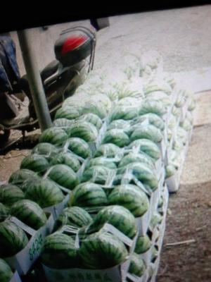 这是一张关于8424西瓜 有籽 1茬 8成熟 5斤打底的产品图片