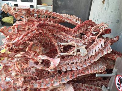 这是一张关于羊骨头的产品图片
