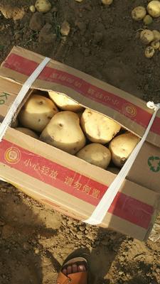 河北省秦皇岛市昌黎县中薯5号土豆 2两以上