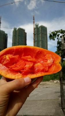 广西壮族自治区南宁市江南区红心木瓜 2 - 2.5斤