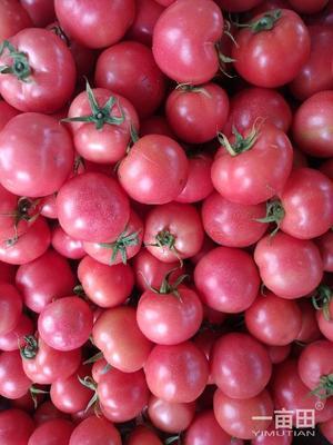 浙江省宁波市北仑区以色列西红柿 不打冷 硬粉 弧二以上