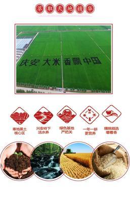 黑龙江省绥化市庆安县东北大米 绿色食品 晚稻 二等品