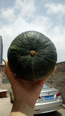 广西壮族自治区南宁市江南区贝贝南瓜 1~2斤 扁圆形