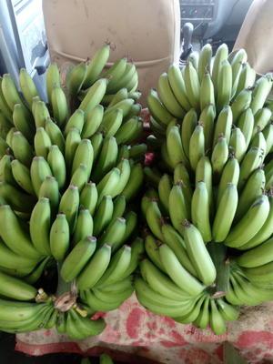 广西壮族自治区南宁市西乡塘区金陵香蕉 七成熟 10.0斤