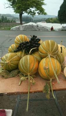 这是一张关于丰雷瓜 2斤以上的产品图片
