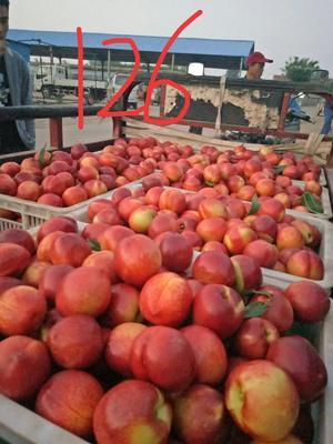 山东省临沂市平邑县126油桃 2两以上 55mm以上