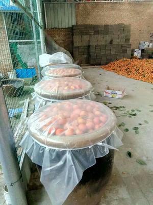 山西省运城市万荣县柿子醋