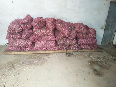 云南省昆明市官渡区紫皮大蒜 混级统货 多瓣蒜