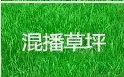 四川省成都市彭州市台湾草皮