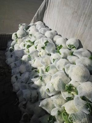 甘肃省定西市临洮县白花菜花 紧密 3~4斤 乳白色