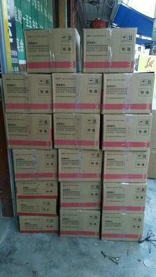 广东省茂名市化州市白糖罂荔枝 2cm