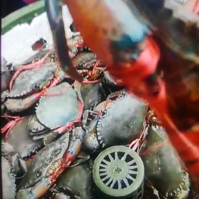 广东省广州市番禺区青蟹 2.0-2.5两 统货
