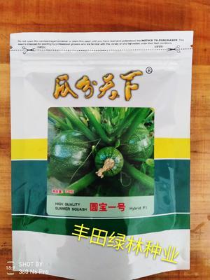 福建省漳州市南靖县西葫芦种子