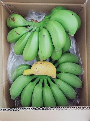 广西壮族自治区南宁市西乡塘区米蕉 八成熟 40斤以下