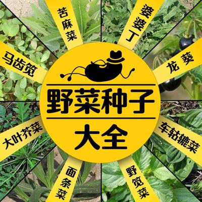 江苏省徐州市新沂市荠菜种子