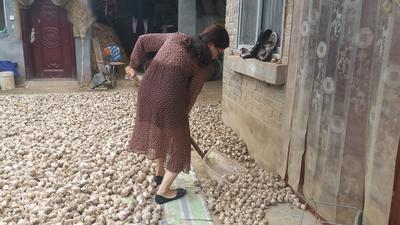河南省周口市淮阳县紫皮大蒜 5.5-6.0cm 多瓣蒜
