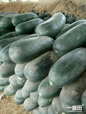 这是一张关于吊瓜的产品图片