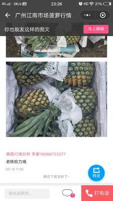 海南省儋州市儋州市海南菠萝 2 - 2.5斤