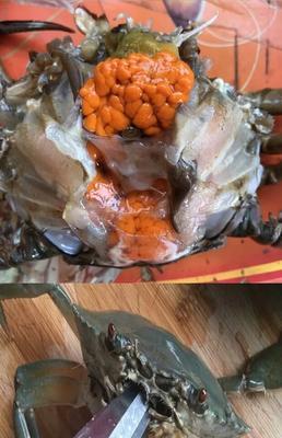 广东省广州市荔湾区锯缘青蟹 2.0-2.5两 母蟹